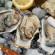 【曼食慢语】大文豪海明威的私藏巴黎美食:生蚝与香槟