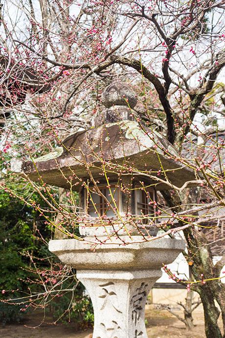 日本京都——北野天满宫<wbr>早春的梅花