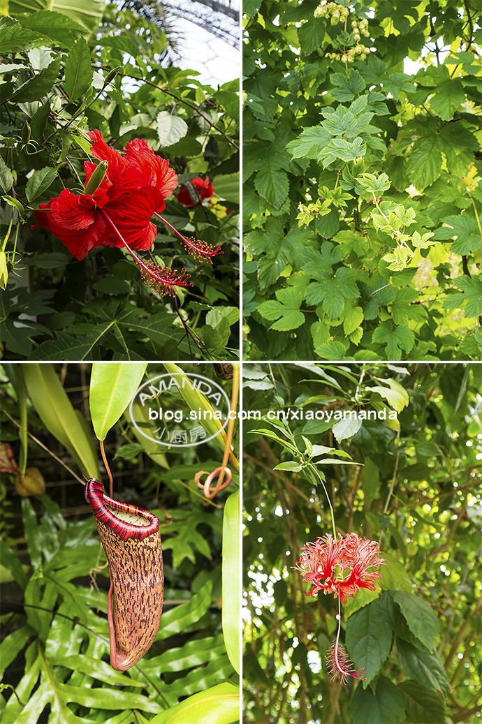 西南海岸Cornwall夏末游记(一)——伊甸植物园、迷失花园、沙拉上的青虫
